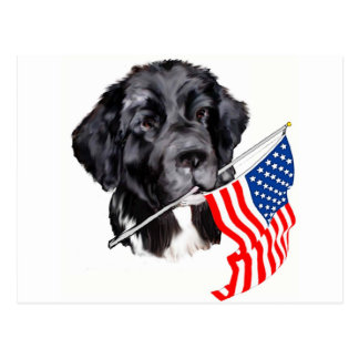 Newfoundland Dog with Flag Postcard
