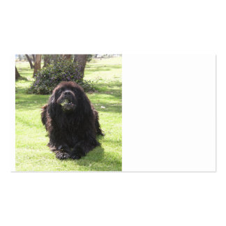 Newfoundland laying.png pack of standard business cards