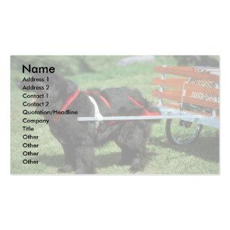 Newfoundland Pack Of Standard Business Cards