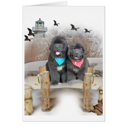 Newfoundland Puppies on beach cards