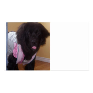 Newfoundland_puppy_2.png Pack Of Standard Business Cards