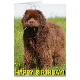 Newfoundland puppy birthday card