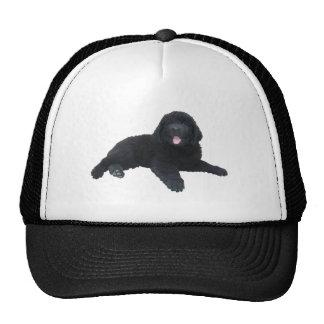 Newfoundland Puppy Cap