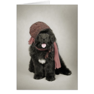 Newfoundland puppy card