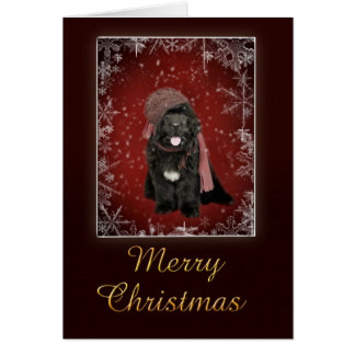 Newfoundland puppy Christmas card