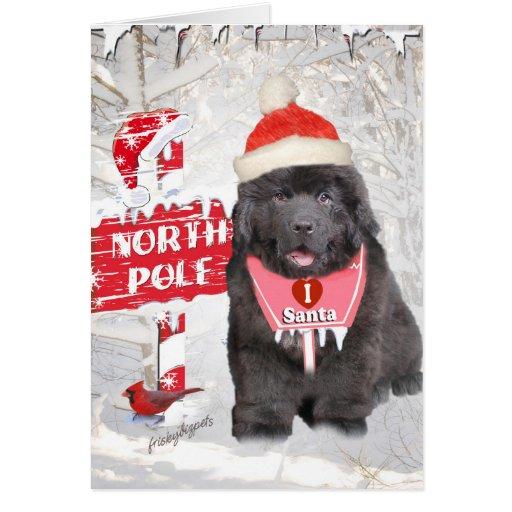 Newfoundland Puppy Loves Santa Card