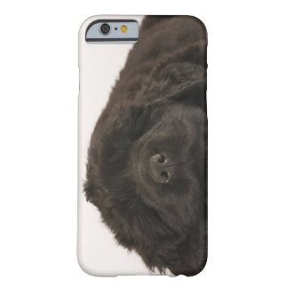 Newfoundland Puppy sleeping (Canis familiaris). Barely There iPhone 6 Case