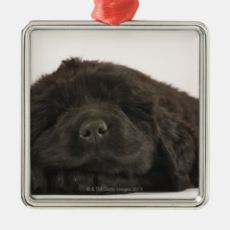 Newfoundland Puppy sleeping (Canis familiaris). Christmas Ornament