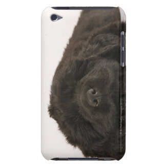 Newfoundland Puppy sleeping (Canis familiaris). iPod Case-Mate Cases