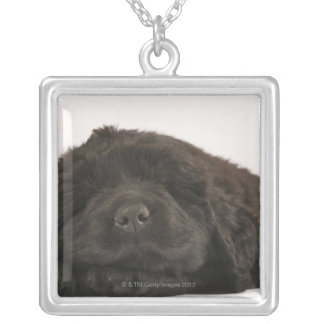 Newfoundland Puppy sleeping (Canis familiaris). Silver Plated Necklace