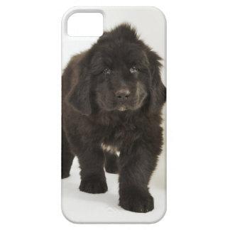 Newfoundland puppy, studio shot iPhone 5 case
