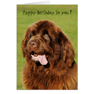 Newfoundland Yappy Birthday Card