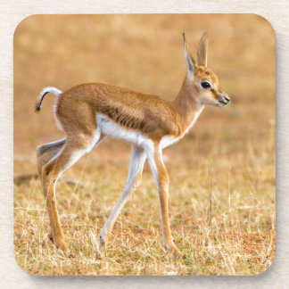 Newly Born Springbok (Antidorcas Marsupialis) Coaster