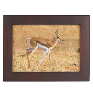 Newly Born Springbok (Antidorcas Marsupialis) Keepsake Box