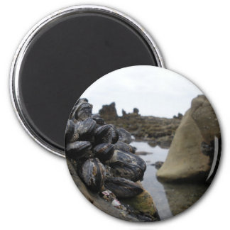 Newport Beach at low tide 6 Cm Round Magnet