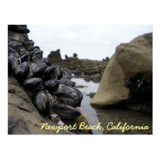 Newport Beach at low tide Postcard
