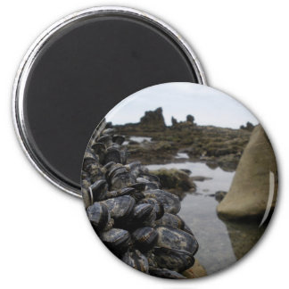 Newport Beach Muscles at Low Tide 6 Cm Round Magnet