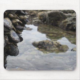 Newport Beach Rocks and Muscles Mouse Pad