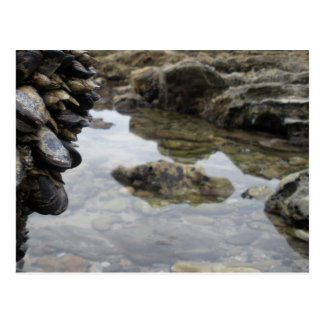 Newport Beach Rocks and Muscles Postcard