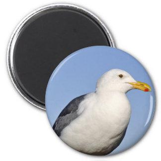 Newport Gull 6 Cm Round Magnet