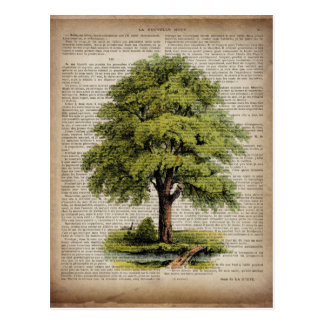newspaper french botanical art vintage oak tree postcard
