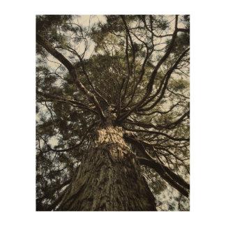 Newtonwards Wood Print
