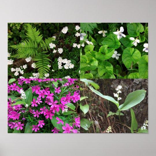 NH spring flower poster