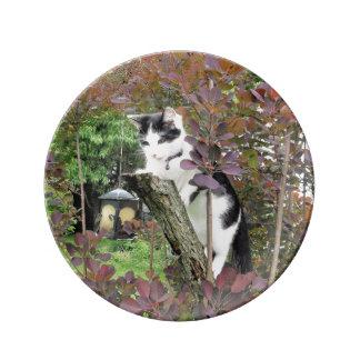 Nibbler in the Purple Smoke Tree Plate