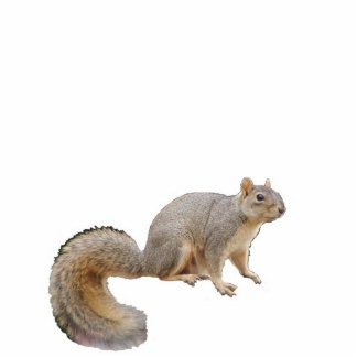 Nibbles the Fortune-Telling Squirrel Ornament Photo Cutout