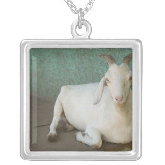 Nicaragua, Granada. Goat resting on porch in Silver Plated Necklace