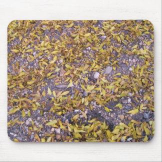 nice autumn mouse mats