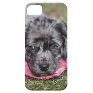 Nice half-breed puppy iPhone 5 cover
