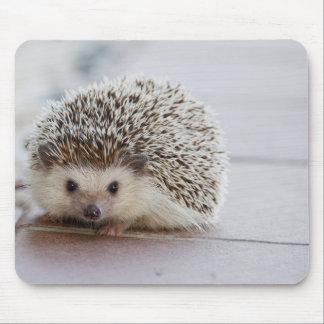 Nice hedgehog mouse mat
