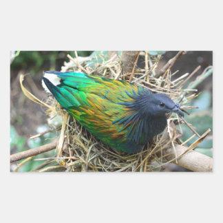 Nicobar Pigeon on Nest Rectangular Sticker