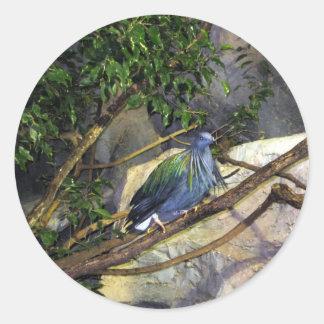 Nicobar Pigeon Stickers