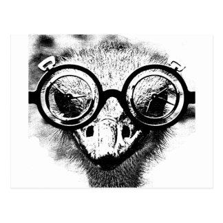 Nicolaus the ostrich in black & white graphic postcard
