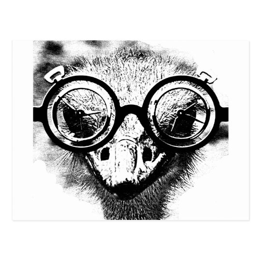 Nicolaus the ostrich in black & white graphic