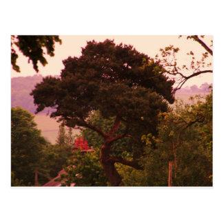 Nidderdale tree acessories postcard