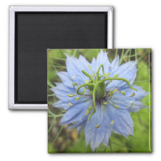 Nigella Blue Green Blooming Flower Fridge Magnets