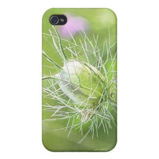 Nigella Seed Head Covers For iPhone 4