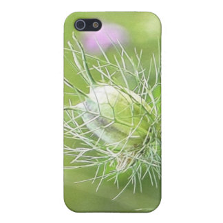 Nigella Seed Head Cases For iPhone 5
