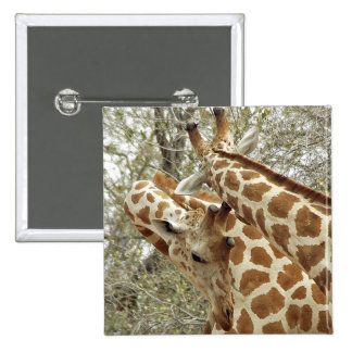 Niger, Koure, two Giraffes in bushes in the west 15 Cm Square Badge