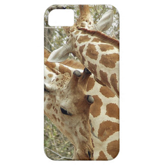 Niger, Koure, two Giraffes in bushes in the west Barely There iPhone 5 Case