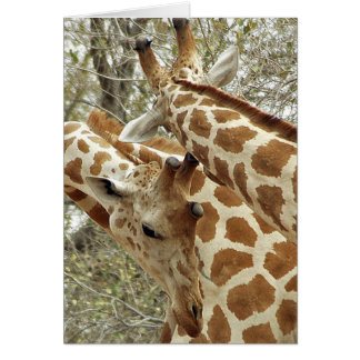 Niger, Koure, two Giraffes in bushes in the west Card
