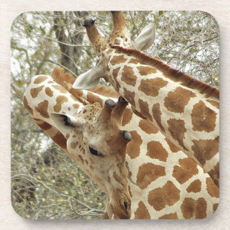 Niger, Koure, two Giraffes in bushes in the west Coaster