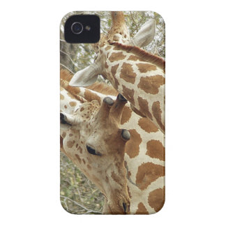 Niger, Koure, two Giraffes in bushes in the west iPhone 4 Covers