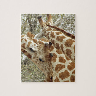 Niger, Koure, two Giraffes in bushes in the west Jigsaw Puzzle