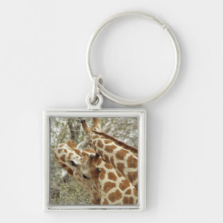 Niger, Koure, two Giraffes in bushes in the west Key Ring