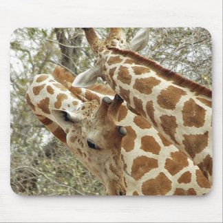 Niger, Koure, two Giraffes in bushes in the west Mouse Pad