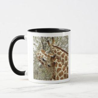 Niger, Koure, two Giraffes in bushes in the west Mug